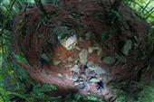 259459 0023 4776917 Monte Falterona (AR), sorgente del fiume Arno, Toscana Rinascimento senza fine bellezza oltre il limite 2020 09 03  © Massimo Sestini